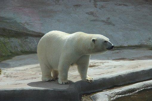 bear-2162631__340.jpg