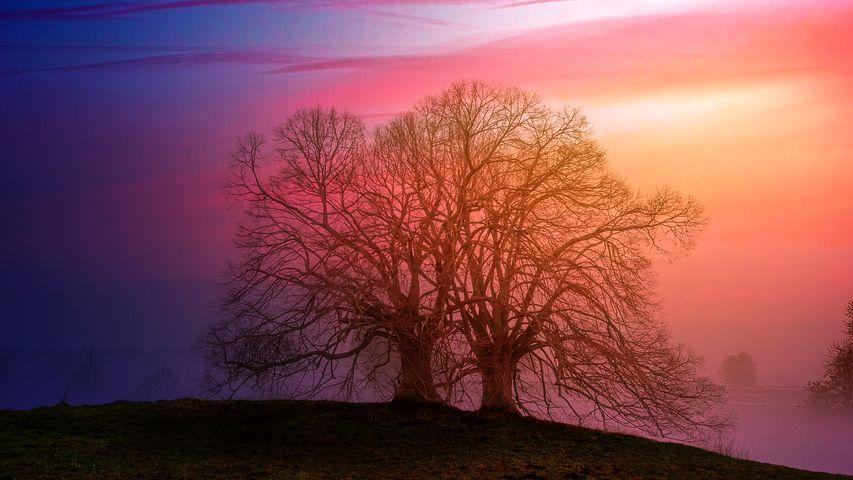 dawn-3152821__480.jpg