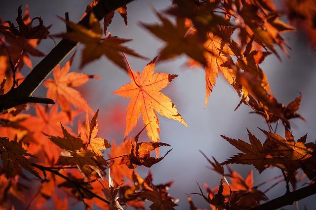 autumn-leave-1415541_640.jpg