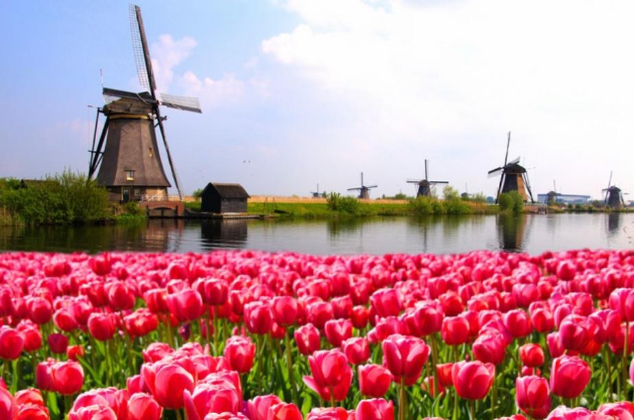 Растения европы