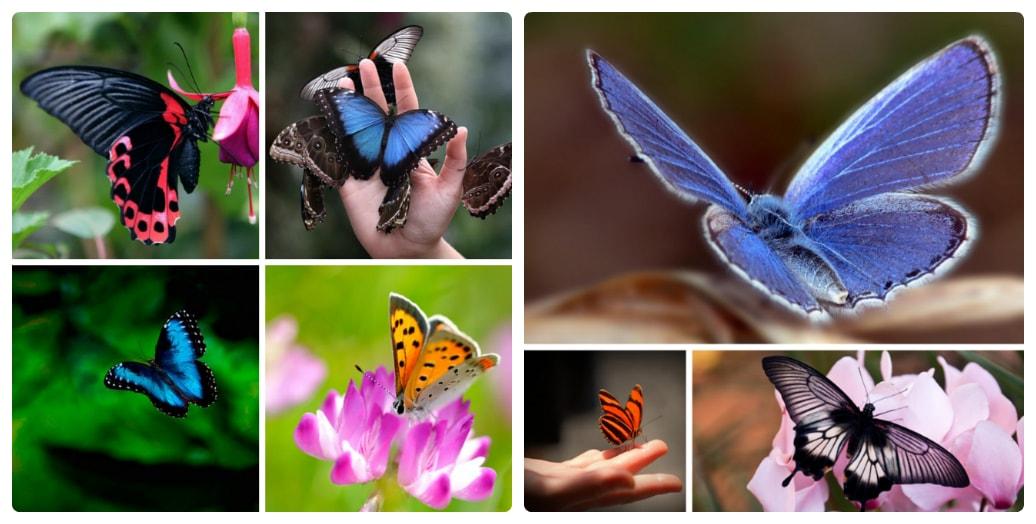 top-10-butterflies-10.jpg