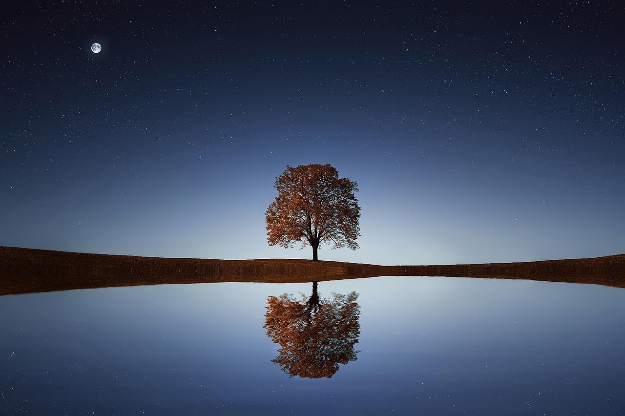 tree-838667_1280.jpg