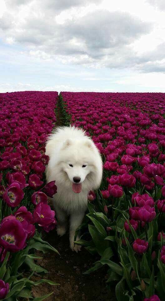 A Beautiful Dog In A Beautiful Flower Field.jpg