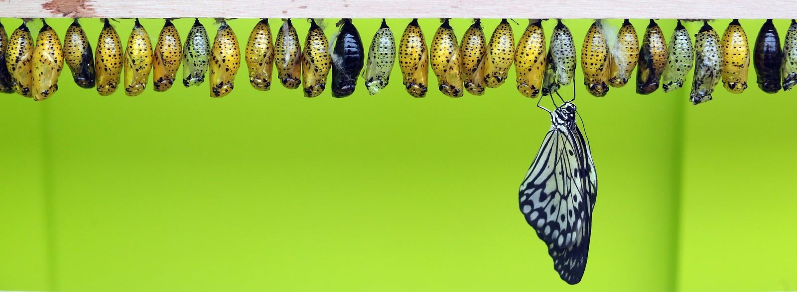 Sensational-Butterflies_pixanews-14.jpg