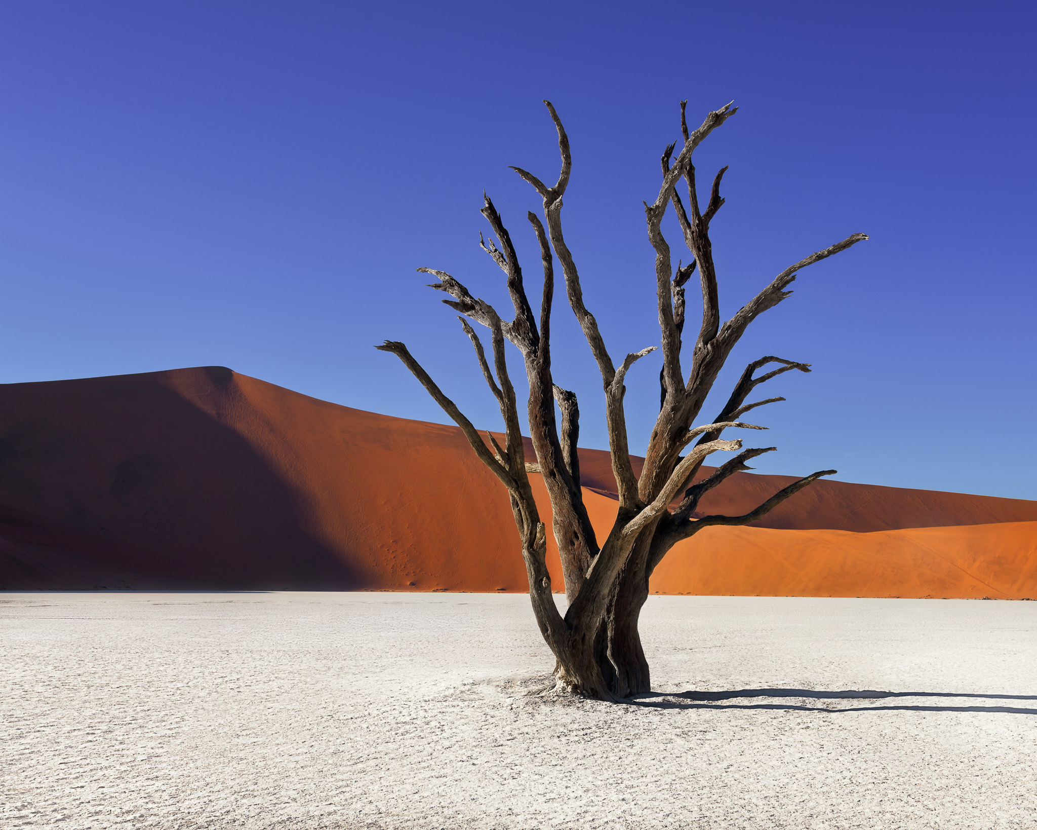 Dead-Acacia-Trees-and-Red-Dunes-of-Deadvlei-in-Namib-Naukluft-Park-Namibia.jpg