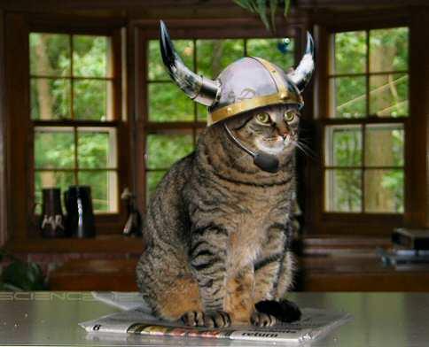 Кошка-викинг.jpg