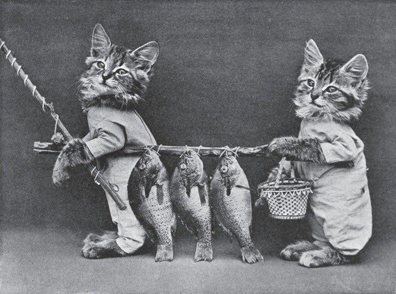 кошки4.jpg