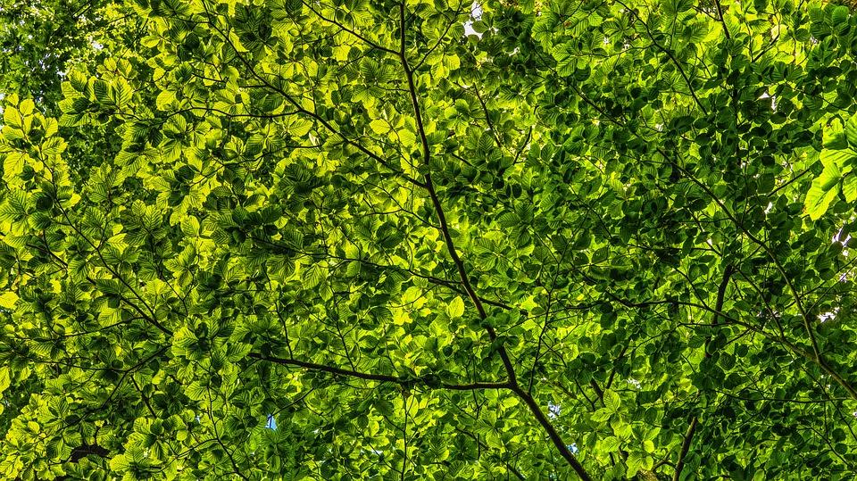 canopy-2552954_960_720.jpg