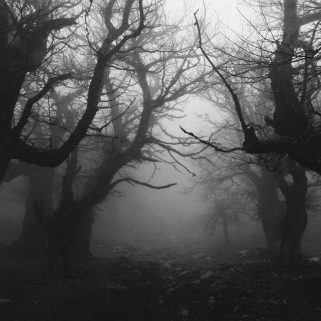 Деревья в тумане ф.jpg