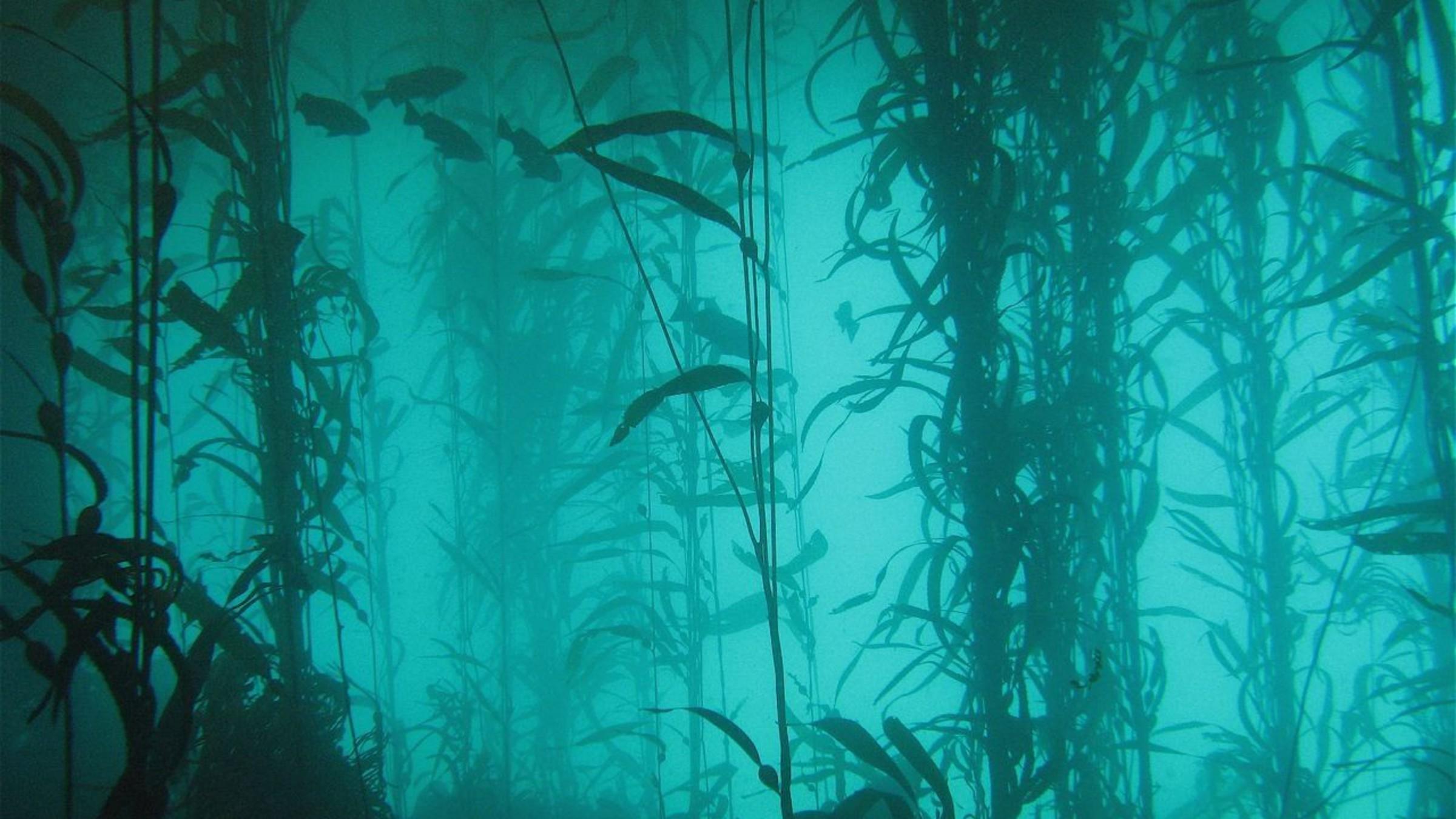 ocean-nature-fish-plants-lakes-algae-underwater-2400x1350-wallpaper.jpg