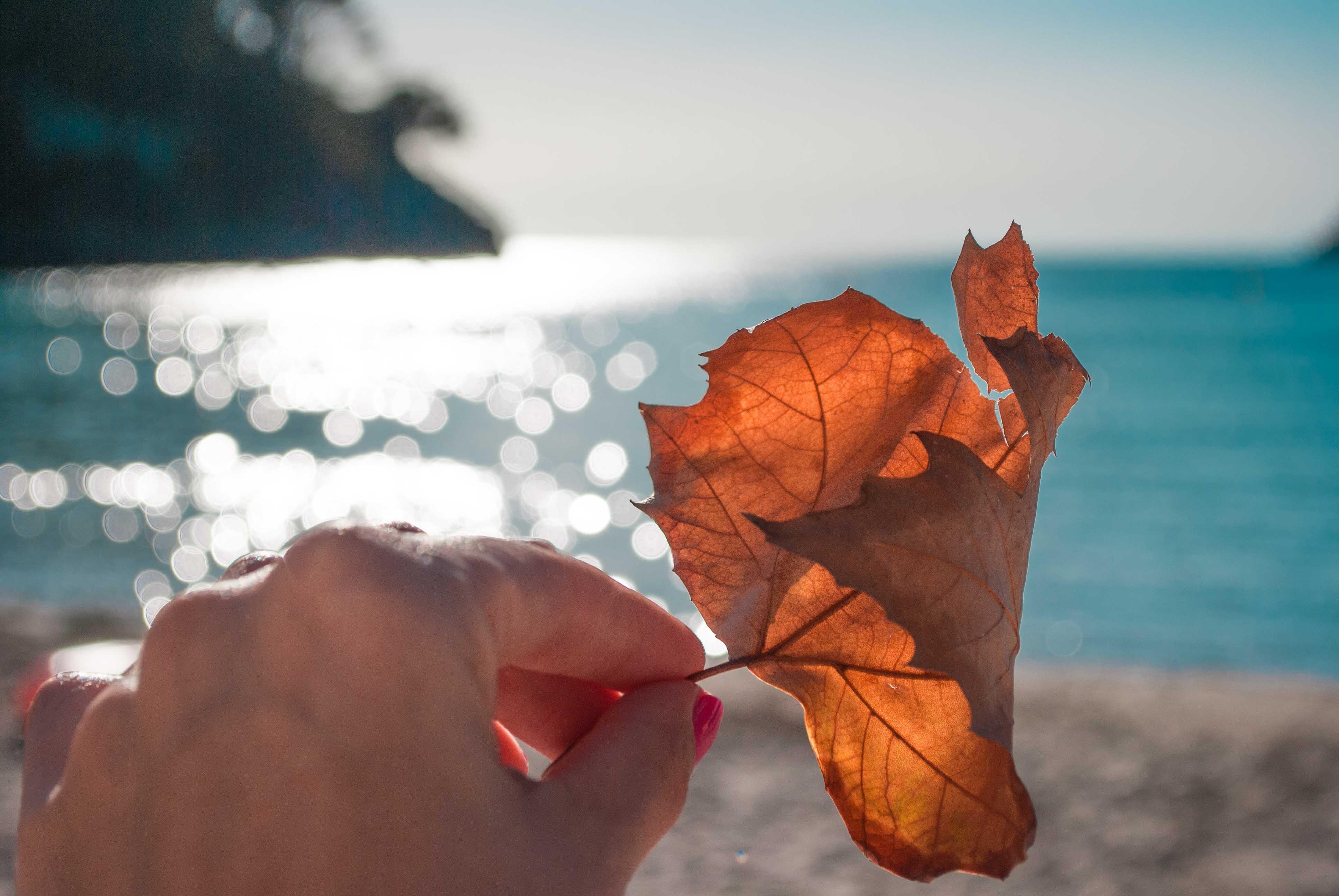 [Фото-Конкурс ВРЕМЕНА ГОДА] Осенние листья на Менорке - редкость
