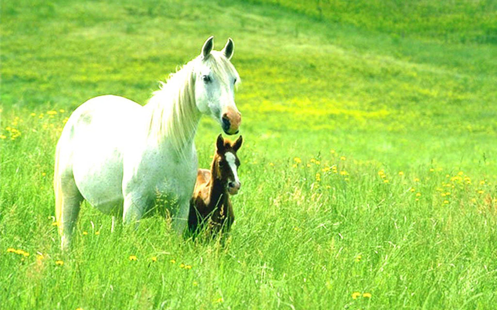 animals-wallpapers-desktop-wallpaper-mac-horses-about-wildlife-background-ponies-apple.jpg