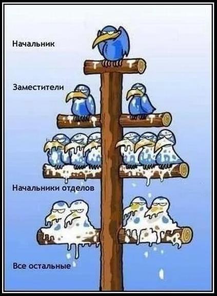 ЖИВОТН.png