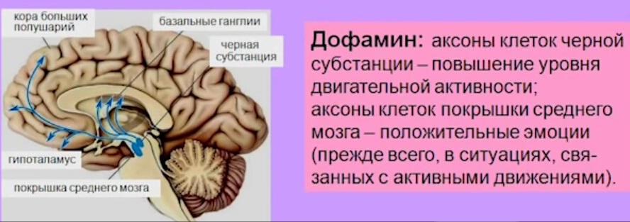 NEW!!! Коротко и ясно! Мозг и влияние токсинов! ч.2 Влияние ...