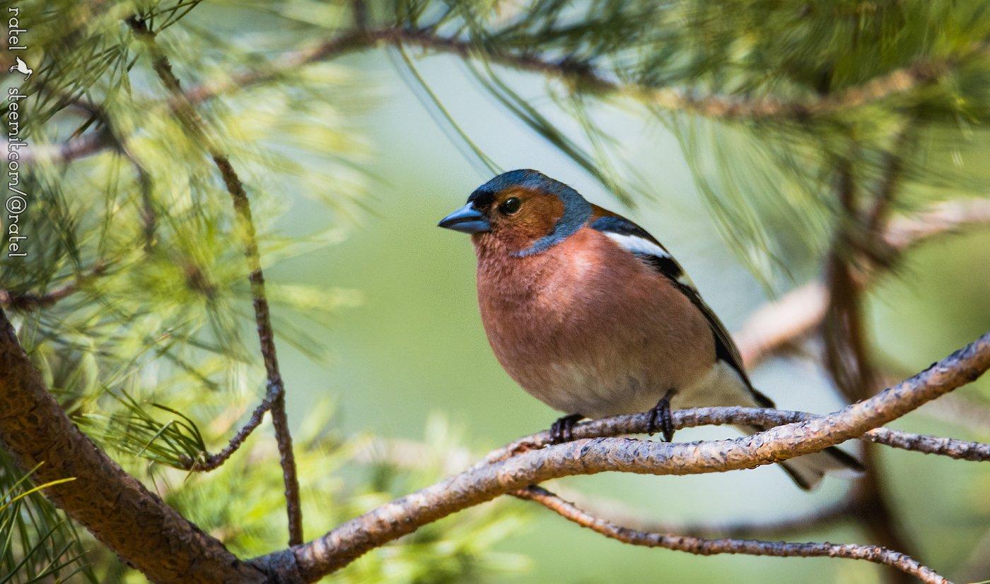 картинки птиц нашего леса все свои деньги