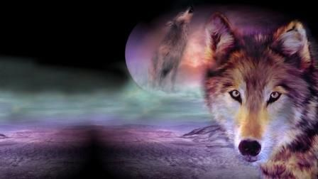 wolf-in-de-maanaaa.jpg