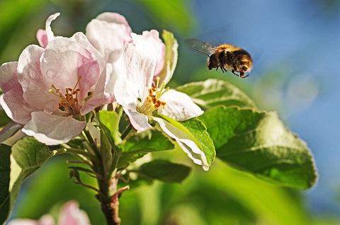 bumblebee-1043067_960_720.jpg