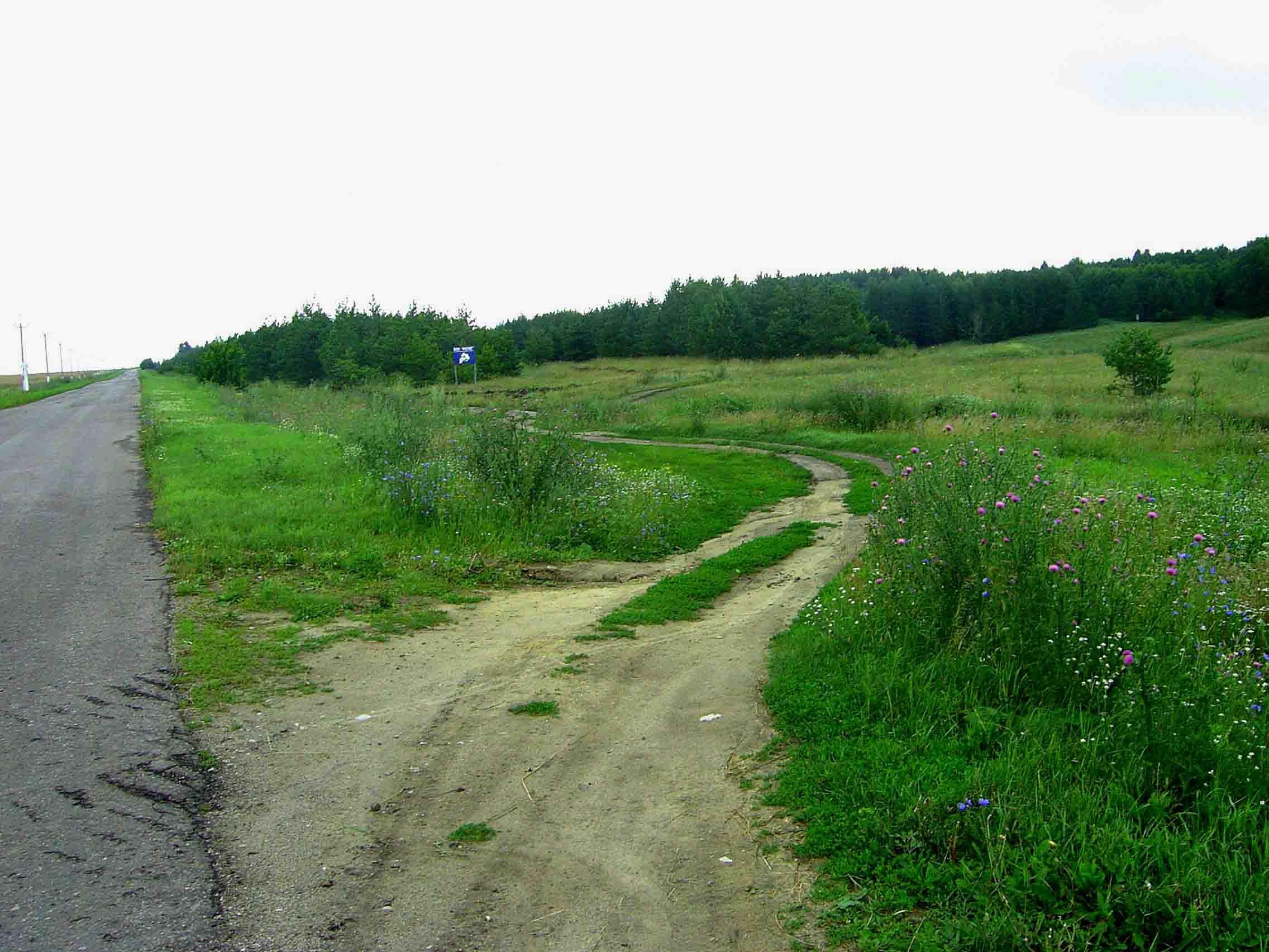 Съезд с дороги в лес2.jpg