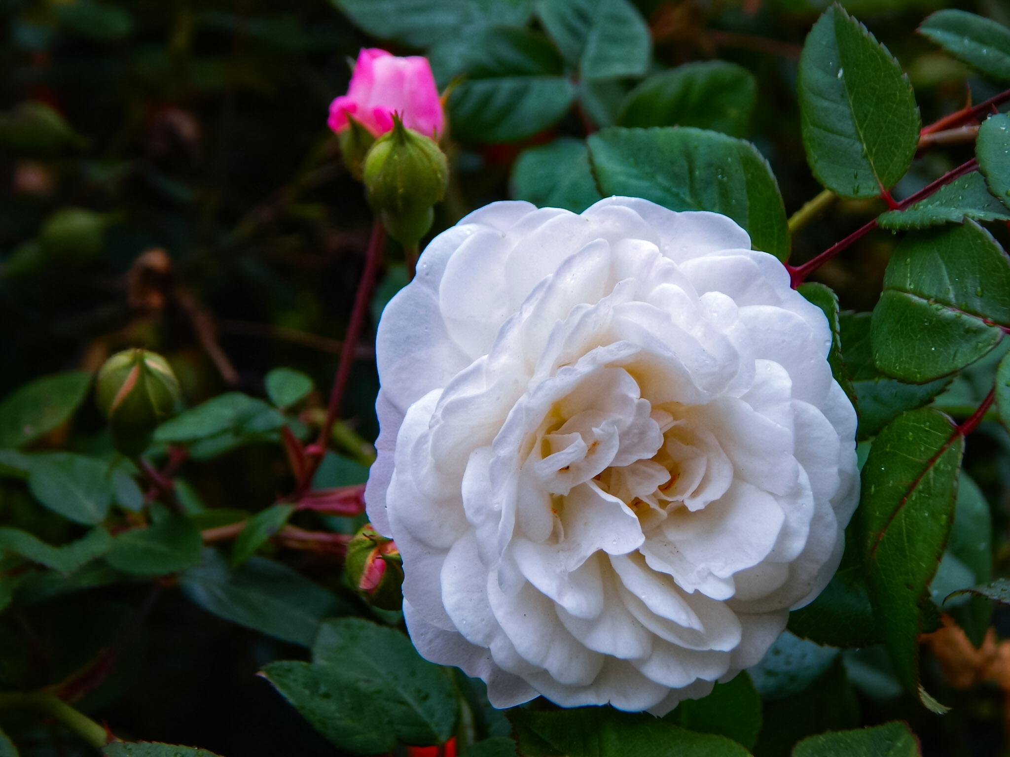 Photo Gallery Beautiful White Flowers Leyargoz Goldvoiceub