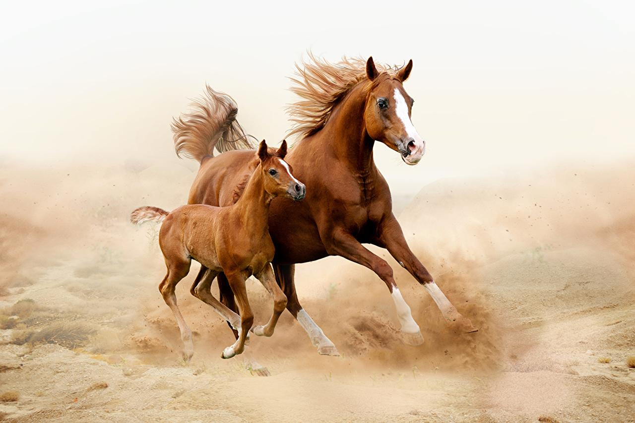 Horses_Cubs_Two_Run_492557.jpg