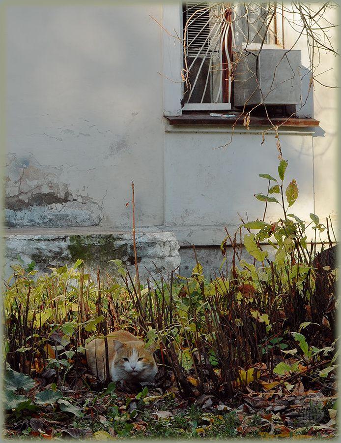 Осенний бродяга.jpg