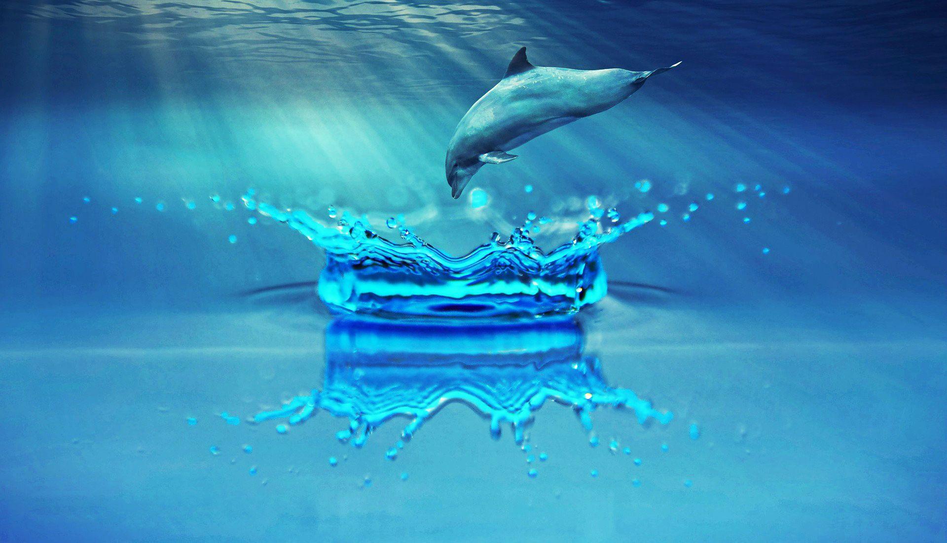 dolphin-1739674_1920.jpg
