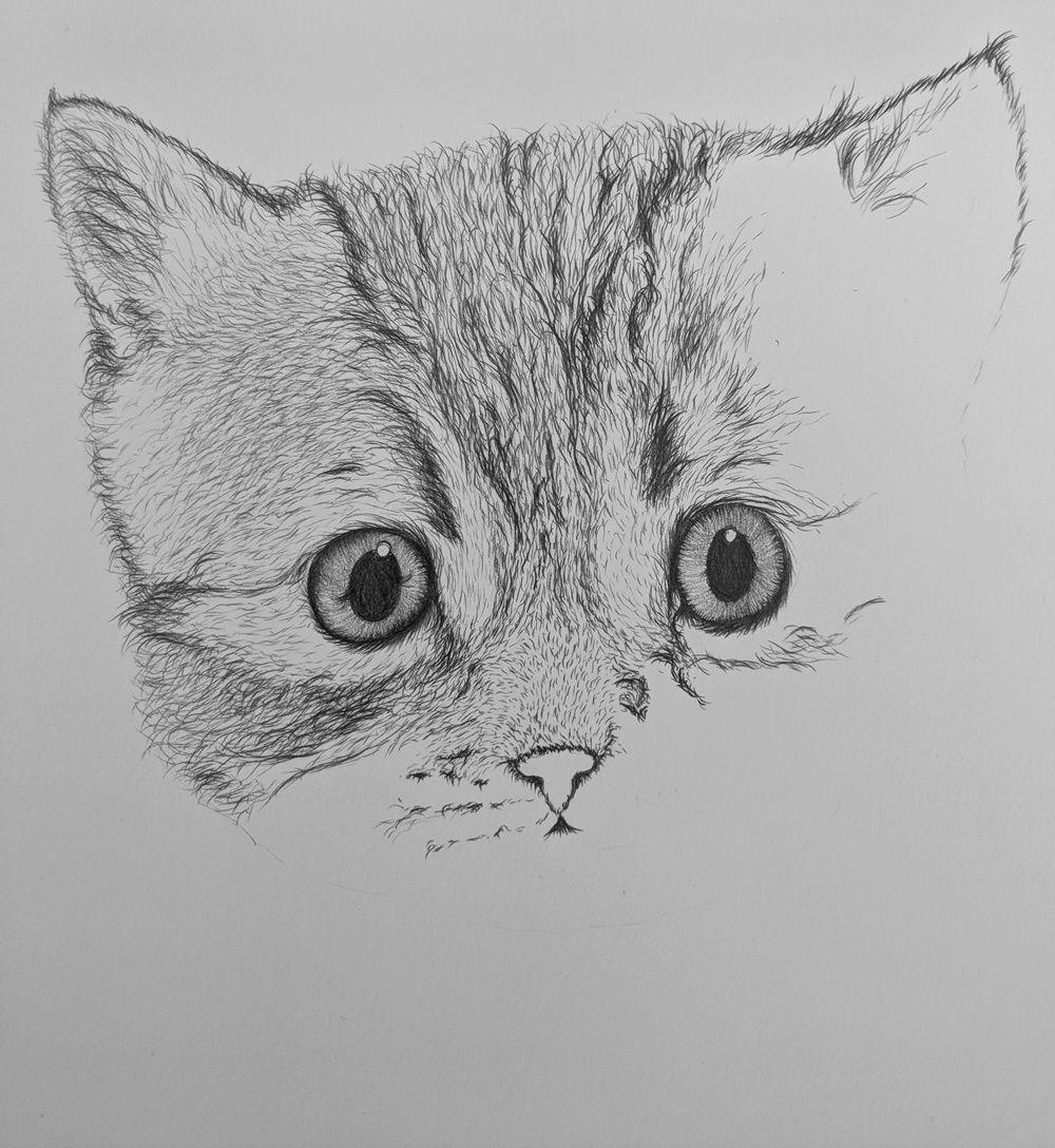 Котята картинки рисунки, медицинским днем