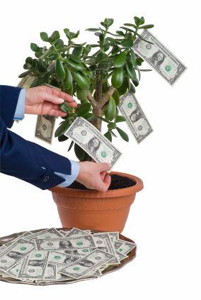 Money-Tree-iStock_000004720303XSmall.jpg