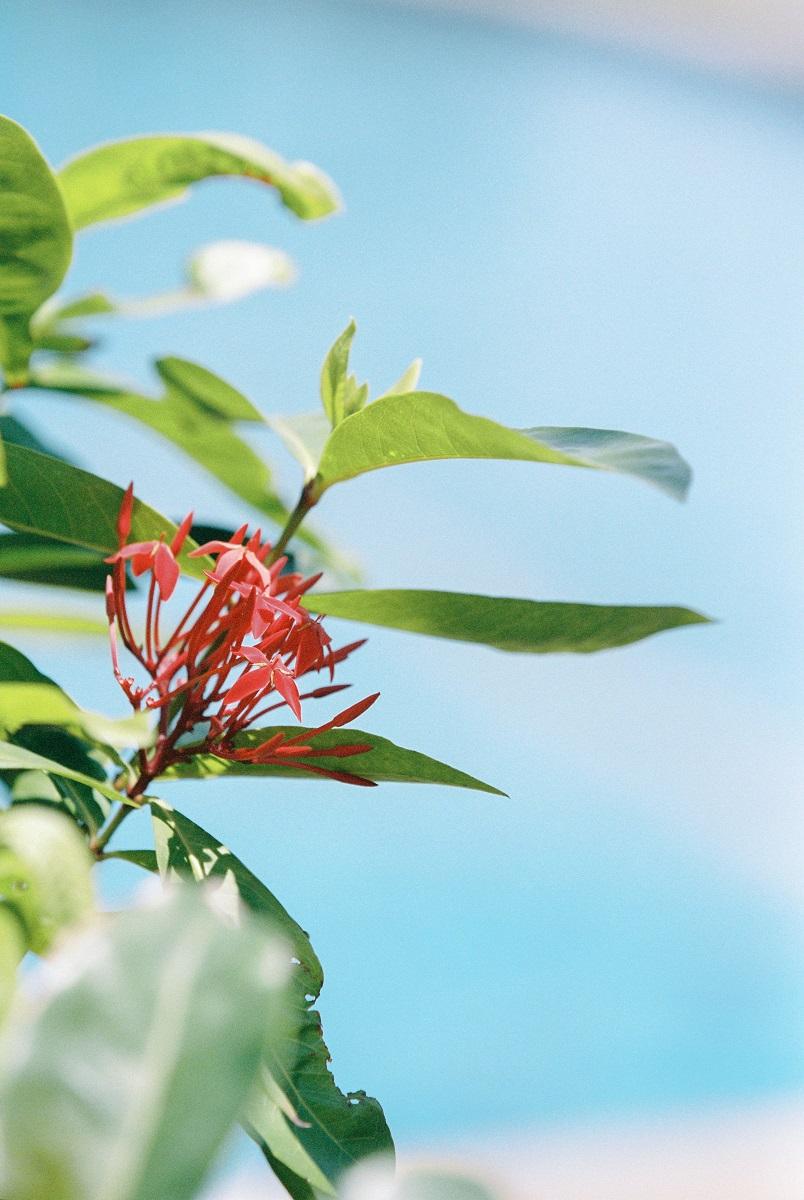April17-130 панган флора.jpg