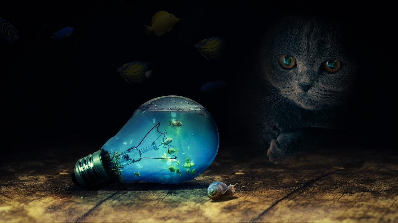 bulb-2352163_1280.jpg