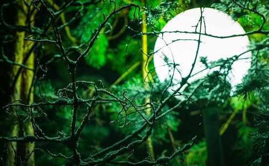 lantern-3112837__340.jpg