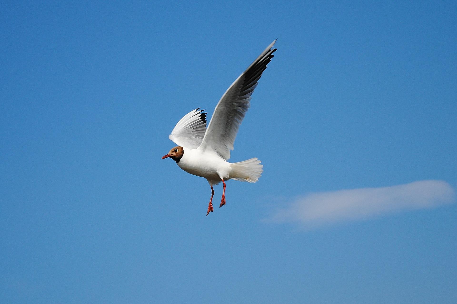 seagull-279645_1920.jpg