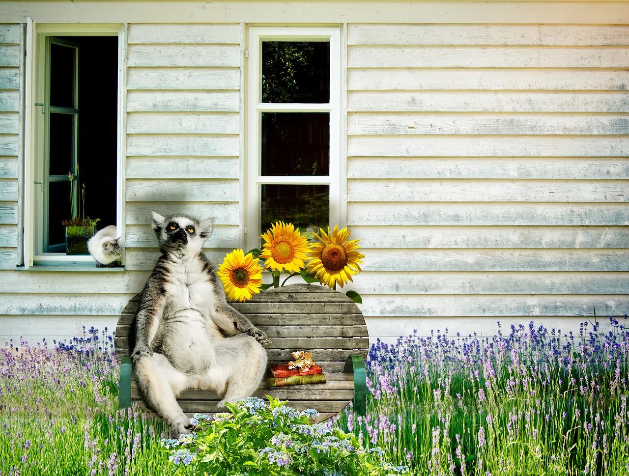 lemur-2861922_1280.jpg