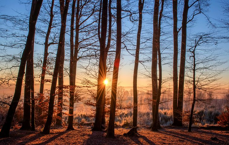 forest-1950402__480.jpg