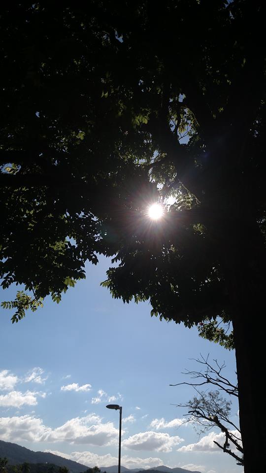 solncevdereve.jpg