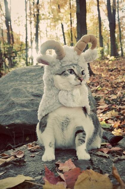 Кот в бараньей шкуре.jpg