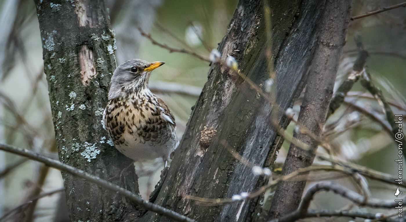 так лесные птицы фото с названиями пензы великолепные декоративные свойства