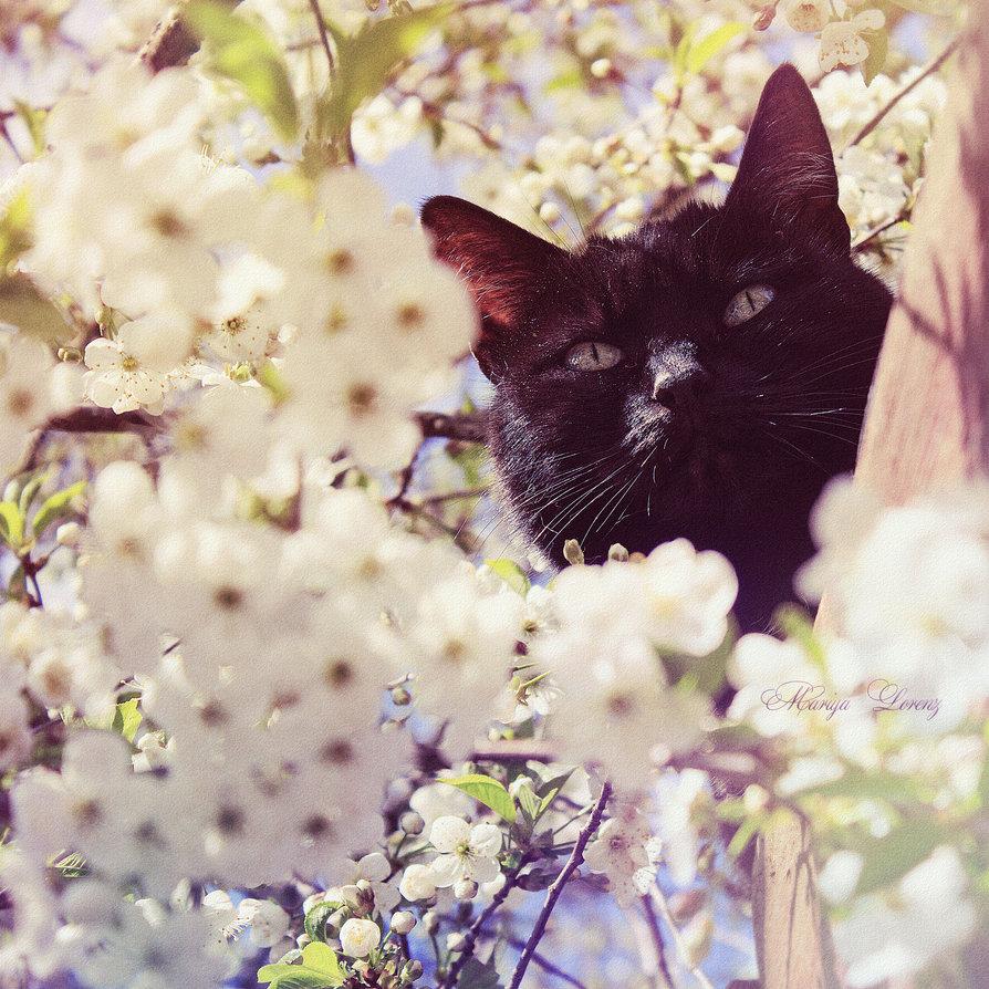 feline_happiness_by_m_lorenz-d8sywa4.jpg