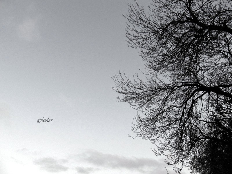 IMG_0772 (2)-004.jpg