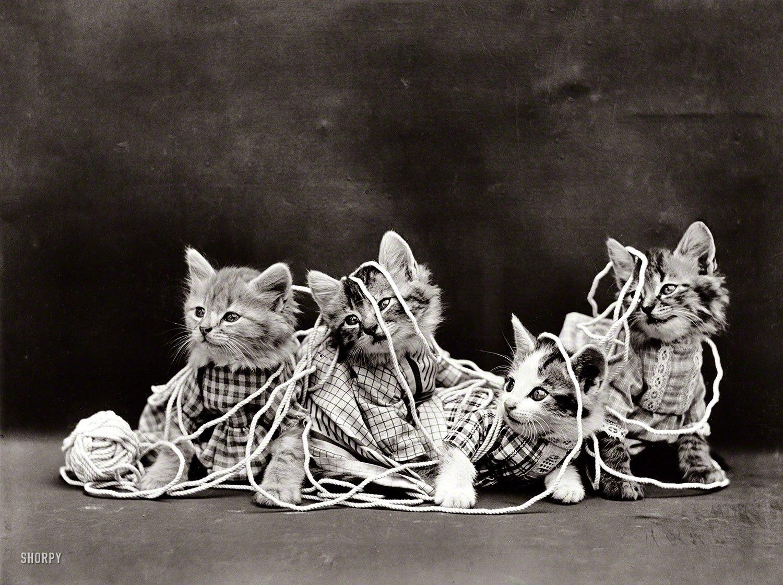 кошки2.jpg