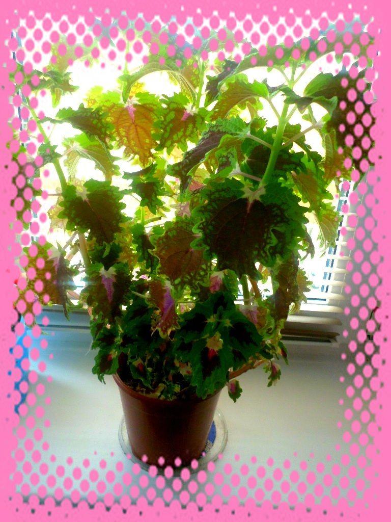 Какое растение занимает