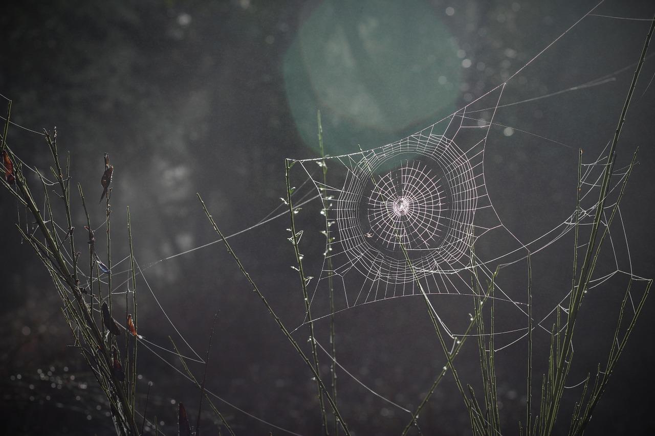 spider-web-1285293_1280.jpg