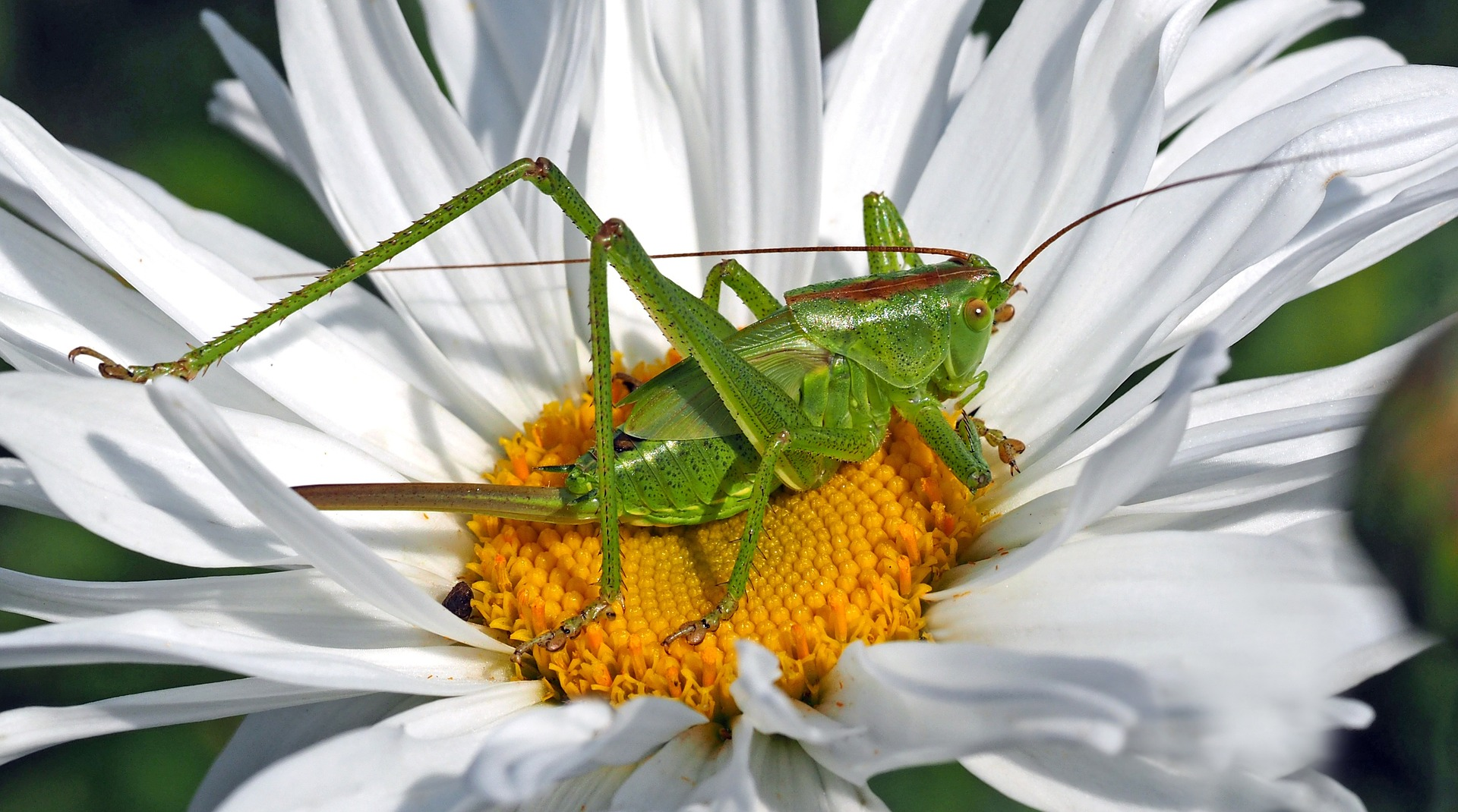 insect-1374695_1920.jpg