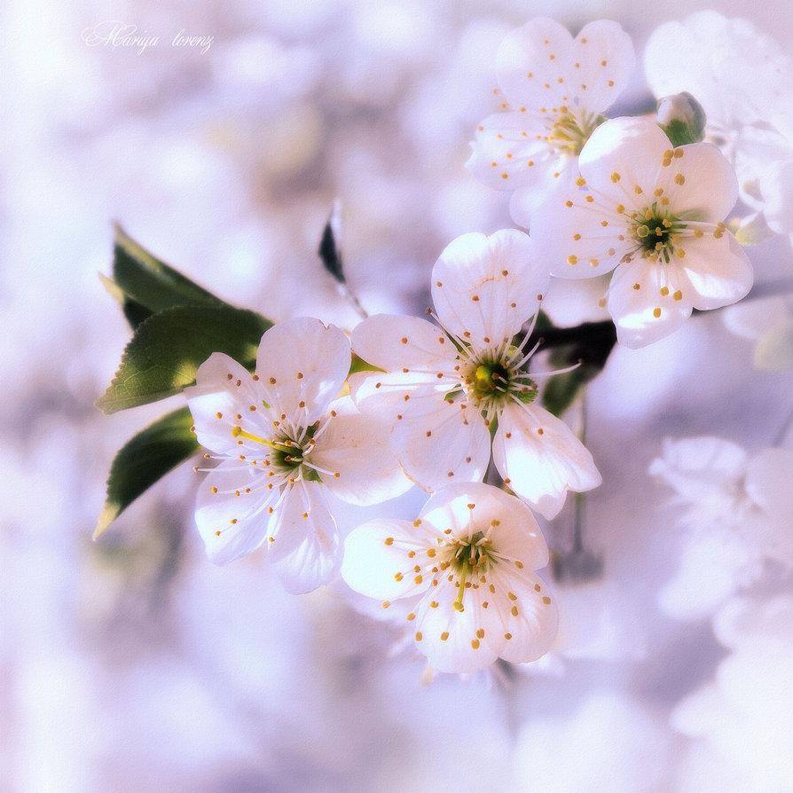 spring_in_the_heart_by_m_lorenz-d8t3dbr.jpg