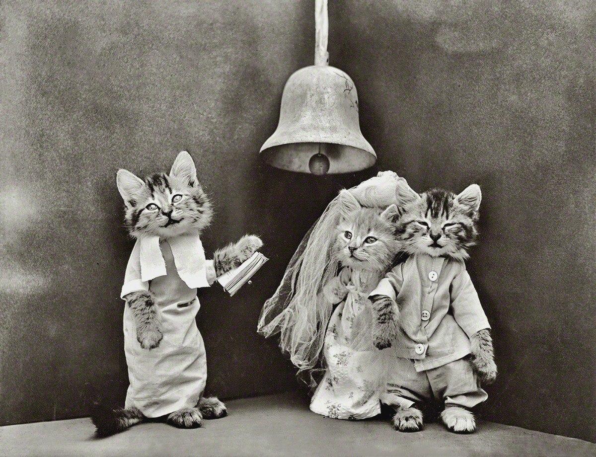 кошки5.jpg