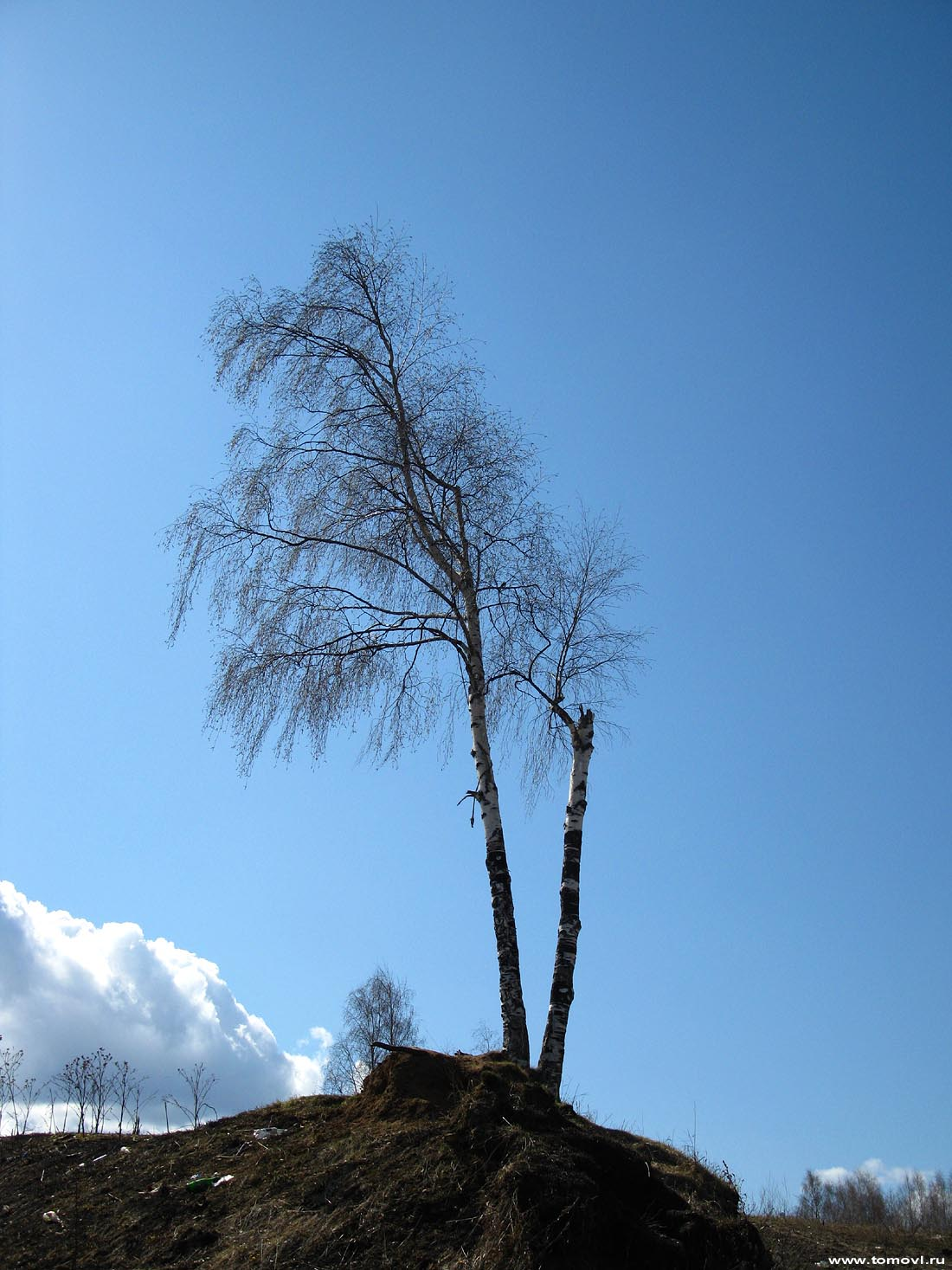 Источник картинки - http://www.tomovl.ru/fishingline_bereza.html