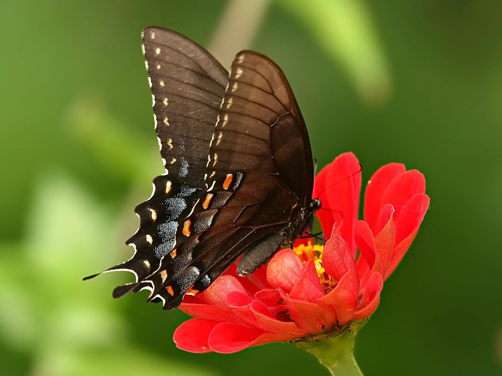 kartinki24_butterfly_0045.jpg