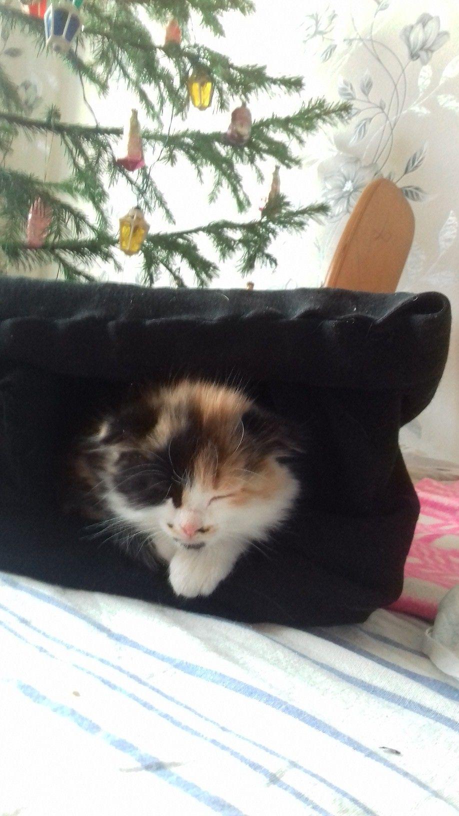 спит котя.jpg