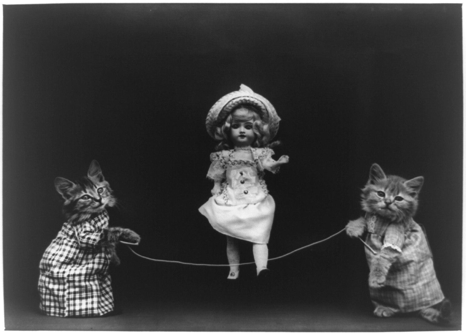 кошки3.jpg