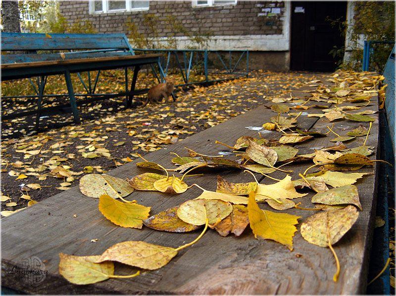 Осенний двор и кот.jpg